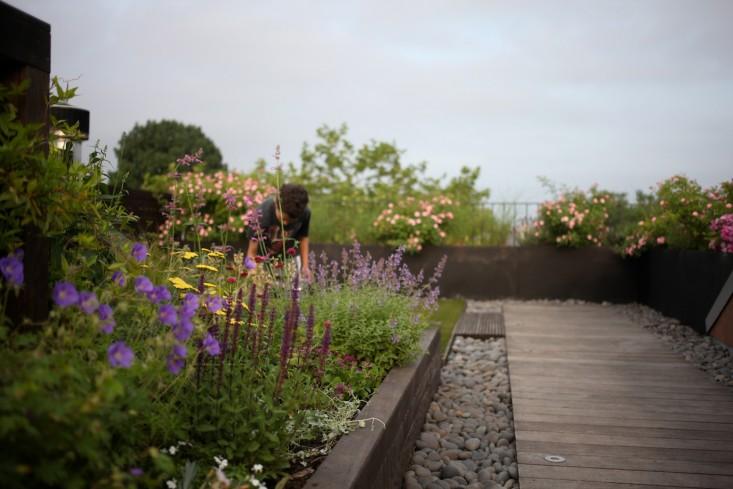 Zeleni vrt na krovu  MojStan.net