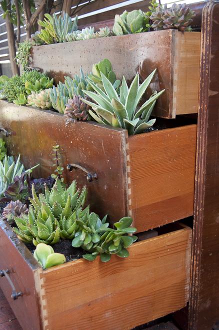 stara-drvena-komoda-iskoristena-za-sadnju-zelenog-bilja-4