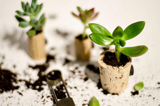 diy-mini-tegle-za-biljke-5