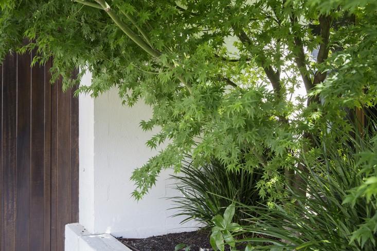 mali vrt u predgrađu melbournea 6