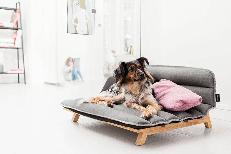 Neka i vaš pas spava na krevetu modernog dizajna