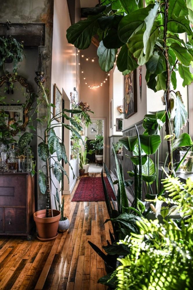 Džungla u stanu